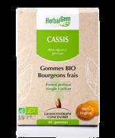 Herbalgem Gomme cassis bio B/24 à BRUGES
