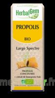 Herbalgem Propolis Large Spectre Solution Buvable Bio Fl Cpte-gttes/15ml à BRUGES